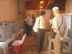Aquaculture researchers observe the circular plastic tank system at the Florida Stock Enhancement Research Facility. Photo