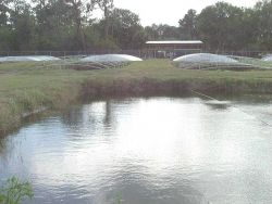 Ponds for fish culture with open framework showing Photo