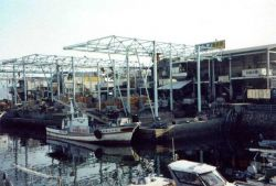 Boats which offload oysters outside the Sato Oyster Culture Company. Photo
