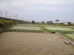 View of turtle growout ponds at the Hattori-Nakamura soft-sheled turtle farm. Photo