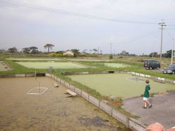 View of growout ponds at the Hattori-Nakamura soft-shelled turtle farm. Photo