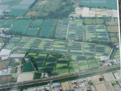 Aerial view of Hattori-Nakamura Soft-shelled Turtle Farm. Photo