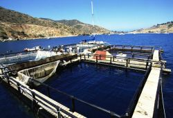 Closeup of netpen in the waters offshore of Catalina Island. Photo