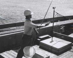 Chummer throwing live bait to attract skipjack aboard Hawaiian sampan BUCCANEER. Photo