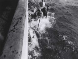 Landing a large tuna onto the stern of the research vessel ANTON BRUUN. Photo