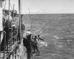 Fishing for tuna aboard a BCF research vessel in the central Pacific Photo
