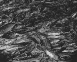 Frozen tuna awaiting processing Photo