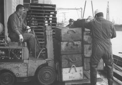 Forklift operator bringing crates of salmon to processing facility of Bumble Bee Company. Photo