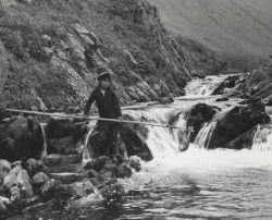 Mike Houdikoff's son netting sockeye salmon on creek above village. Photo