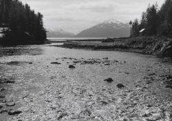 An intertidal spawning area at low tide. Photo