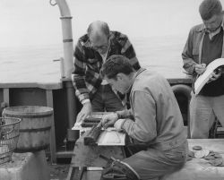 Measuring sea scallops aboard ALBATROSS IV Photo