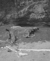 Sea lion pups Photo
