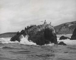 California sea lions and cormorants Photo