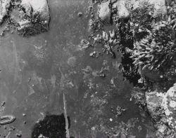 Sea urchin in a tidal pool Photo