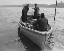 Small boat used in shad fishery - outboard amidships forward to facilitate hauling net over stern. Photo