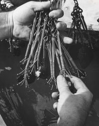 Close-up view showing mussels attached to crow-foot bar hooks Photo