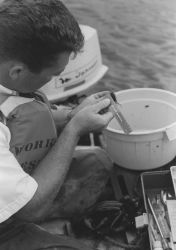 Measuring shrimp caught in research trawl Photo