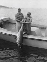 Mackerel shark Photo