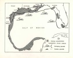 Map showing shrimp concentrations and suggested study areas in the Gulf of Mexico. Photo