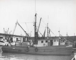 Part of Galveston shrimp fleet showing the JOYCE ELAINE chartered for larval shrimp studies. Photo