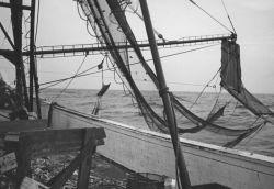 Setting shrimp net aboard the fishing vessel DUDLEY Photo