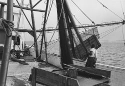 Hauling aboard shrimp trawl doors Photo