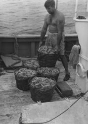 A 400-pound catch of Royal Red shrimp taken in a 40-foot trawl in approximately 200 fathoms. Photo