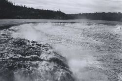 Willamette Falls six weeks after fish6671. Photo