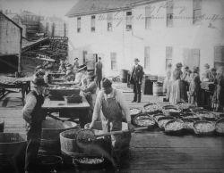 Washing, flaking herring at sardine cannery, Easport, ME. Photo
