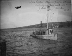 Menhaden steamer Joseph Church arriving in port with 100's of pounds of fish. Photo