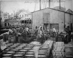 Salting, weighing, and packing mackerel. Photo