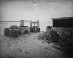 Menhaden factory. Photo
