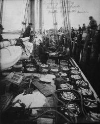 Dressing and salting mackerel on board vessel, Gloucester Harbor, MA. Photo