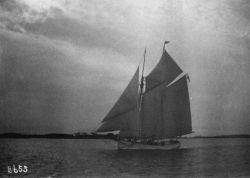 Grampus off Gloucester. Photo