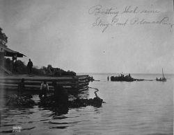 Boating shad seine, Stony Point, Potomac River, VA. Photo