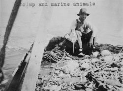 Shrimp and marine animals. Photo