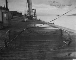 Albatross, Blake deep sea trawl, front view. Photo