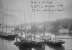 Pelagic sealing, Victoria Harbor, BC, 1894, types of sealing vessels. Photo