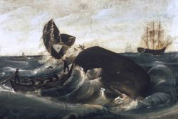 Capturing a sperm whale, third quarter, 19th century Photo