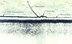A tracing made by an echo sounder shows concentrations of Pacific ocean perch on the sea floor, as well as the otter trawl of another vessel sweeping  Photo