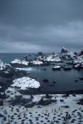 Antarctic fur seals and chinstrap penguins congregate at a rocky inlet on Seal Island Photo