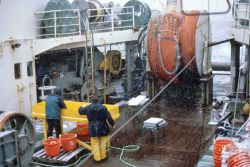 AMLR scientists work diligently through inclement weather at the catch sorting station on the stern of the R/V YUZHMORGEOLOGIYA Photo
