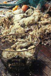Invertebrates caught in a benthic (seafloor) net haul. Photo
