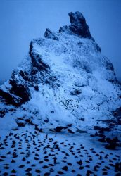Chinstrap penguins congregate at a snowy pinnacle in Seal Island. Photo