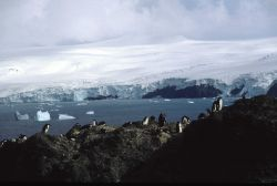 A chinstrap penguin colony near a glacier at Seal Island. Photo