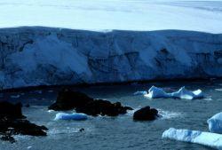 A close up of an Antarctic fur seal. Photo