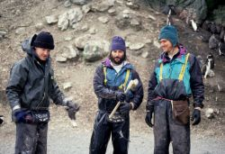 Biologists Brian Walker, Mike Schwartz and William Meyer prepare to weigh penguin chicks, Seal Island. Photo