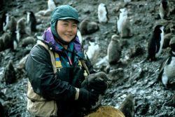 Penguin biologist Lisa Hiruki-Raring preparing to weigh a chinstrap penguin. Photo
