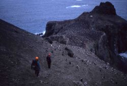AMLR biologists walk to the bird blind at Seal Island, where they can monitor penguin behavior without disturbing the penguin colony. Photo