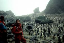 A biologist at a chinstrap penguin colony on Seal Island. Photo